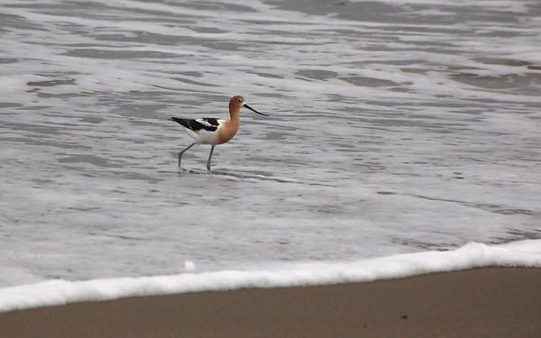 McGrath State Beach, California - July 2008